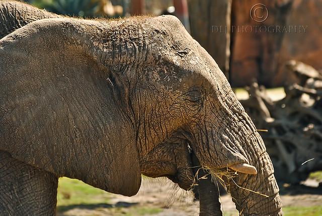 Hungary Elephant