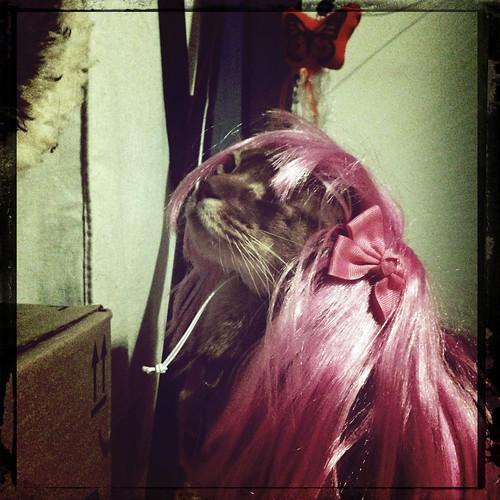 hipsta-angelwigIMG_9319