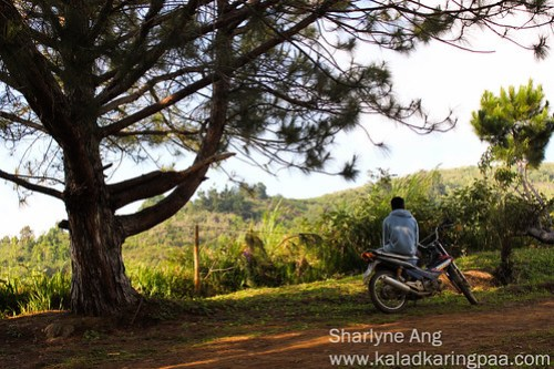 Man with Scooter Under the Pine Tree