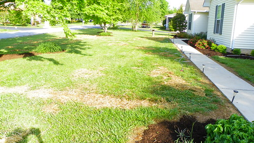 reseeding the lawn