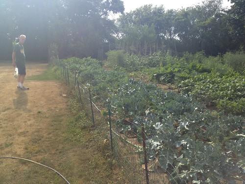 Dean's garden