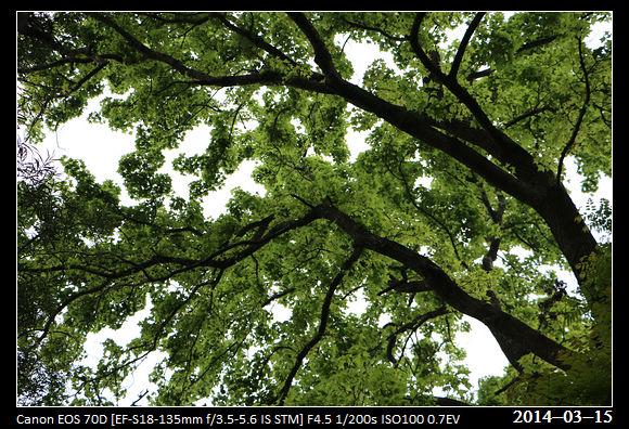 20140315_Green