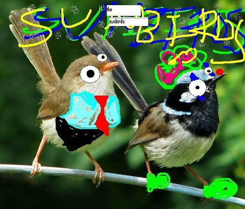SunbirdsPhoto