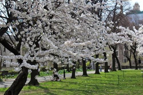 Sakura Park