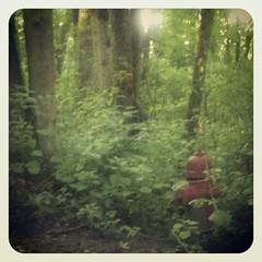 Little hydrant always loses hide and seek.