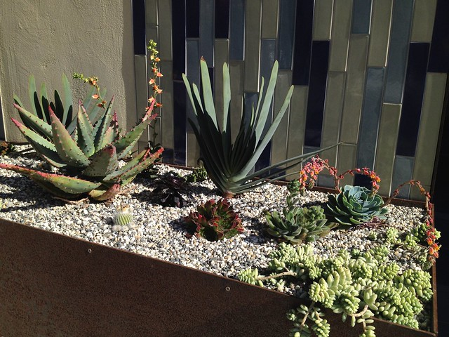 Planter with succulent plants, Jersey Street