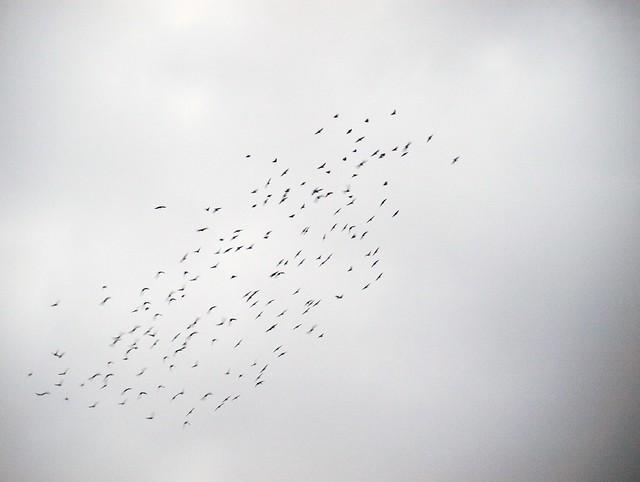 Vogeltanz (8)