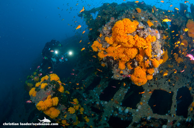 Produce Wreck - Aliwal Shoal, South Africa
