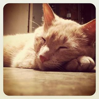 A catnap #photoadaymay #peace