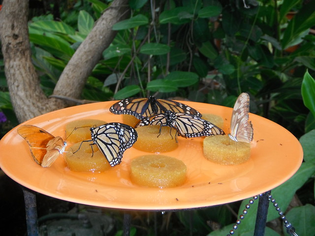 Butterflies in Mariposario del Drago