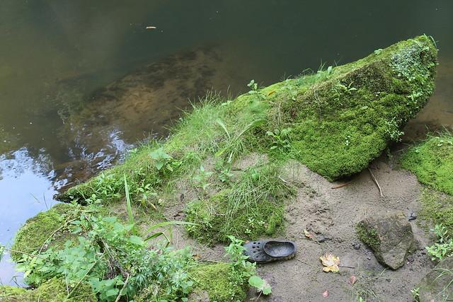 Lost Croc
