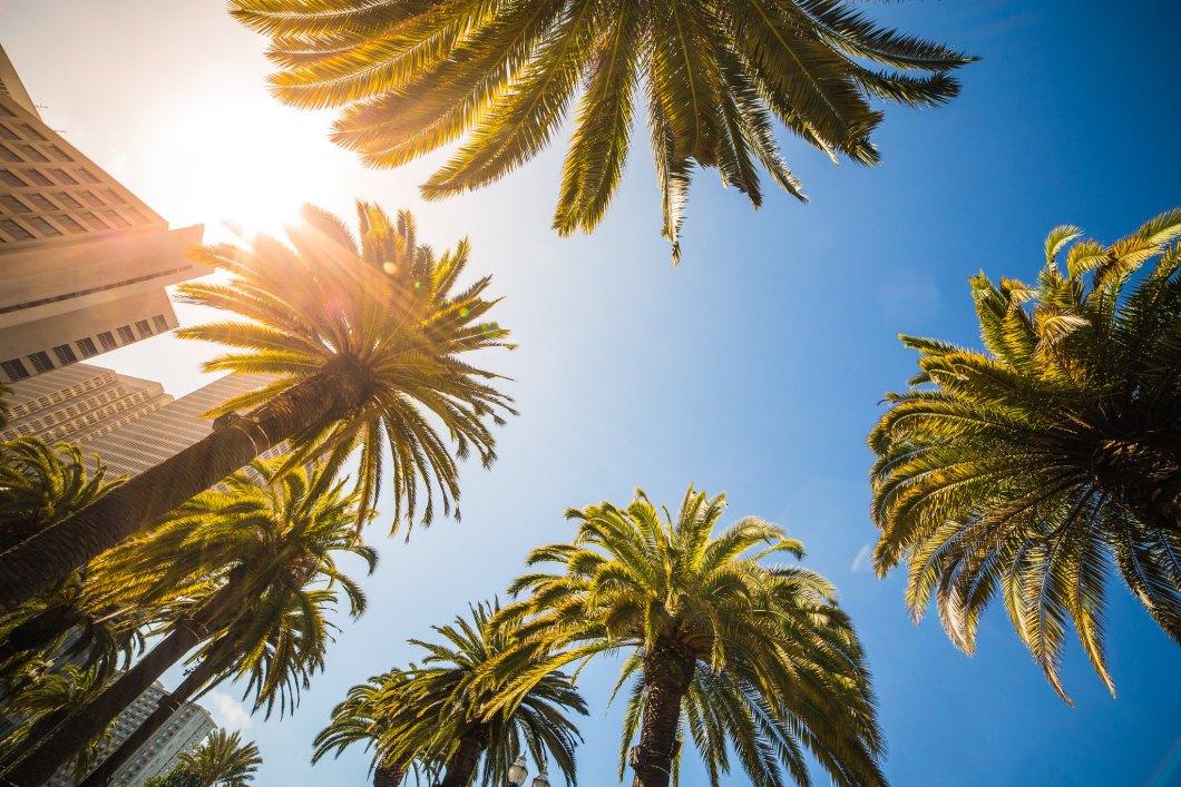 Imagen gratis de unas palmeras en contrapicado