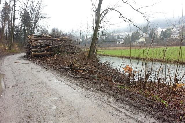 Holzschlag Entlisberg