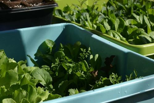 Greens in bins