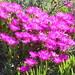 Postberg Flower Trail Sept 2013_0087