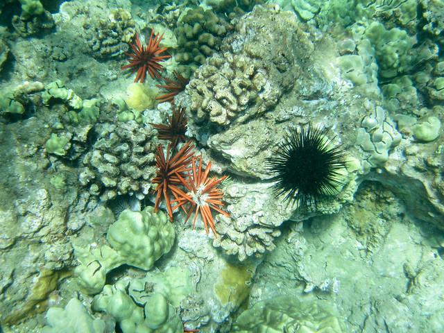 Mokapu Beach Snorkelling Fish Coral