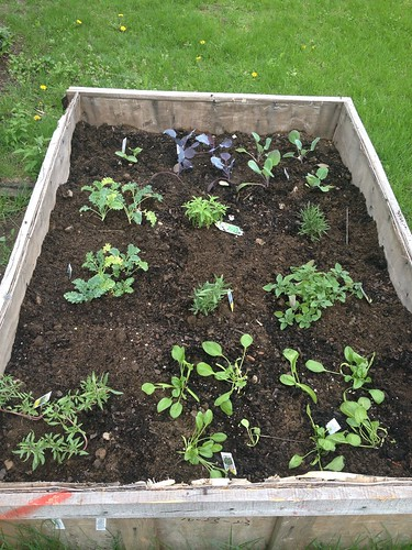 Kale, Brussels, cabbage, herbs, spinach ... cantelope? I think.