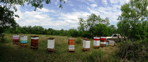 Cibolo Creek Bee Yard