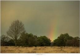 Het kleine stukje regenboog