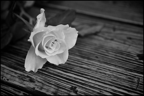 Rose (Black and White) by Davidap2009