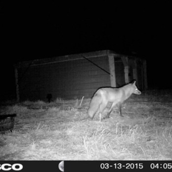 Late Night Visitor