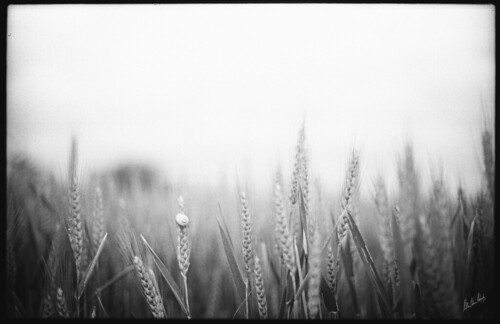 Needle in a Haystack by MatthewOsbornePhotography_
