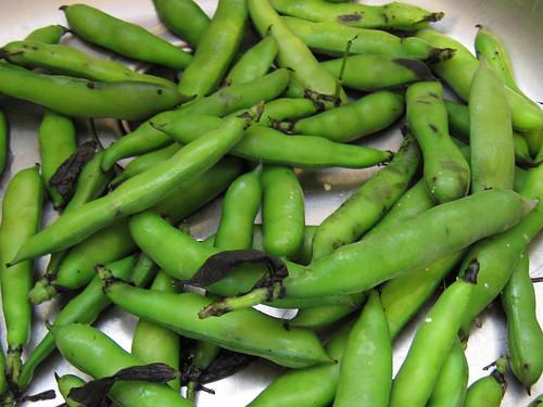 Fava beans in pod