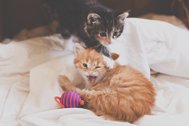 Silly kittens!