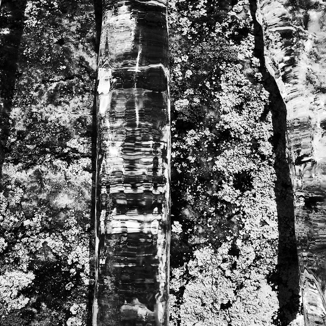 Icicle and lichen (high contrast jpeg)