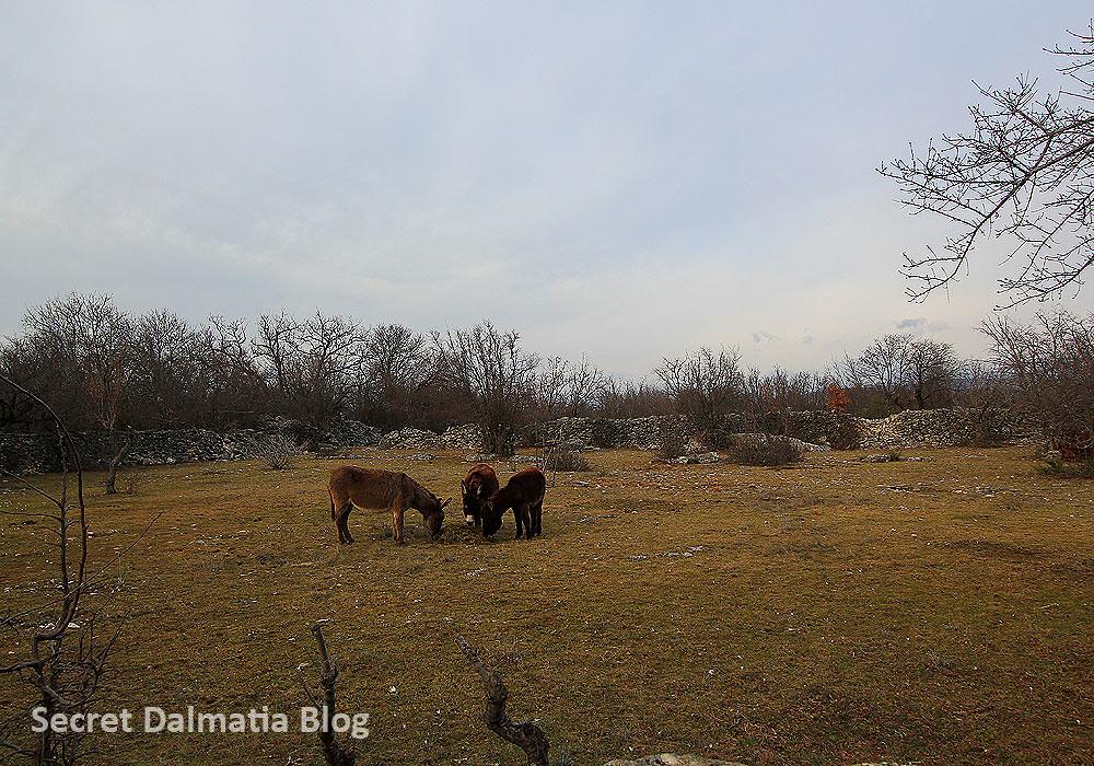 Donkeys on pasture
