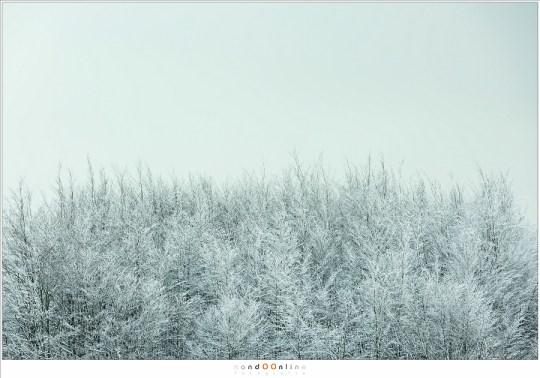 Bomen als dons, haren, een bontmantel... misschien wel de baard van Koning Winter?