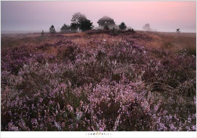 Een typische foto die gebruik maakt van hyperfocale afstand: maximaal scherp van voor tot achter