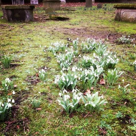 Snowdrops, St Anne's
