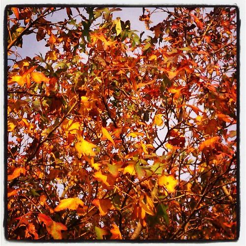 Autumnal glory.