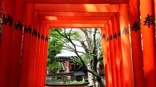Japanese Torii Gates, by Pixelglo Photography
