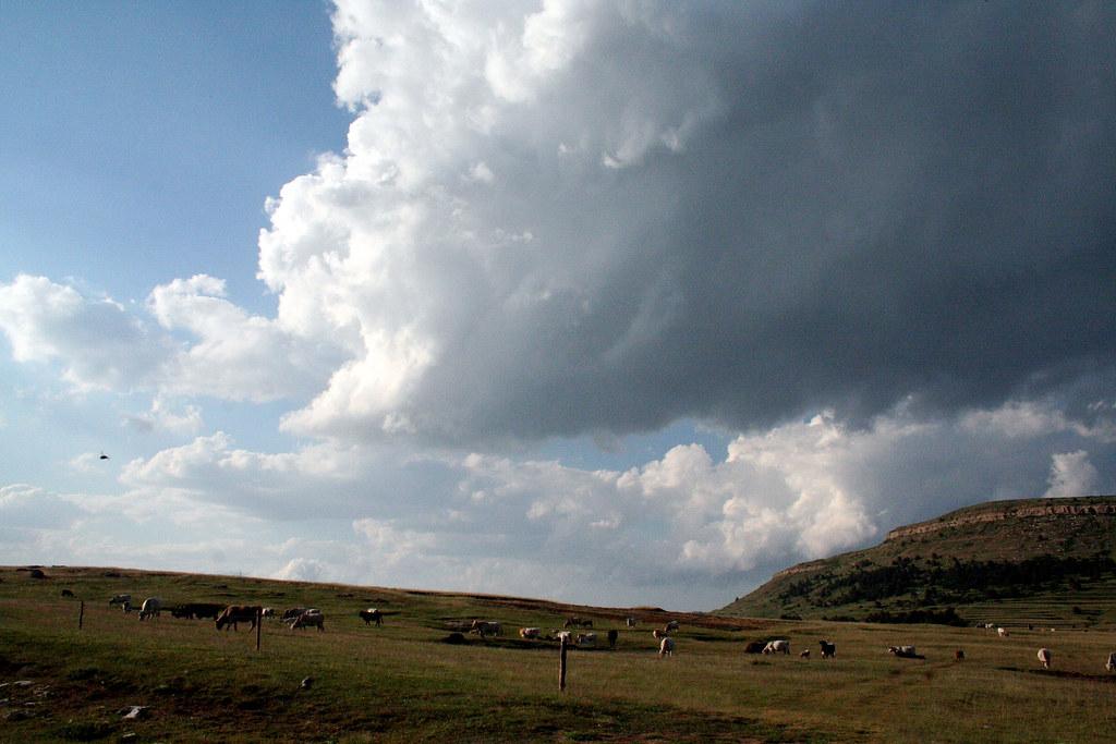 Sierra de Gudar, zona de agostada para ganado vacuno. Autor, Po.psi.que