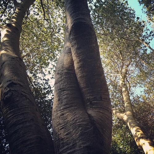 Tree limbs like legs