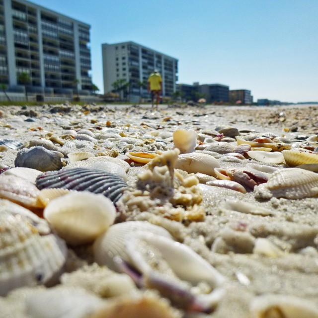 Sep 27 - walk {seagull's view of our walk this morning} #photoaday #beach #gulfofmexico #madeirabeach #shells #florida