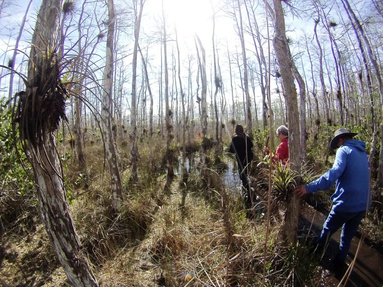 Pure Magic in the Big Cypress Preserve, Florida