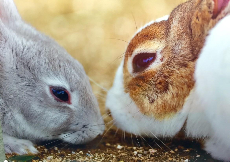 rabbits gallery hibiya