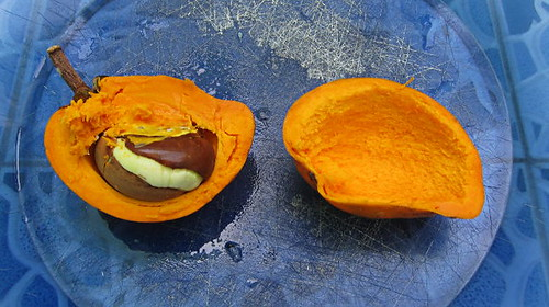 Mamey Sapote - Best. Fruit. Ever.