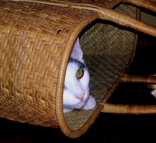 6/365 - Spot in a Basket