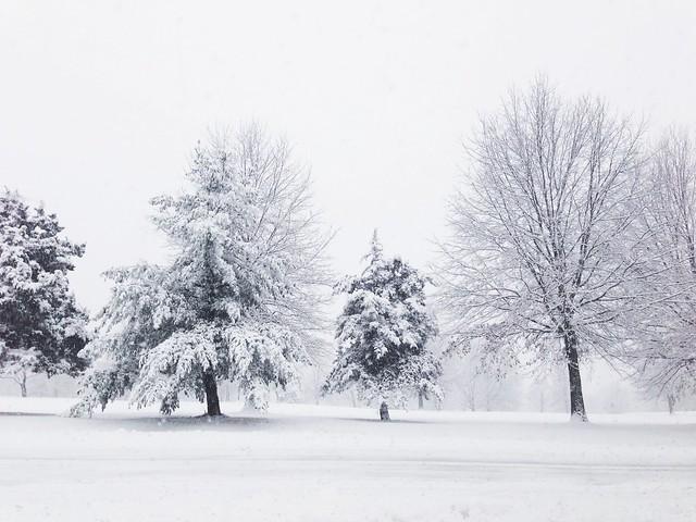 02.03.2014 :: snow forever
