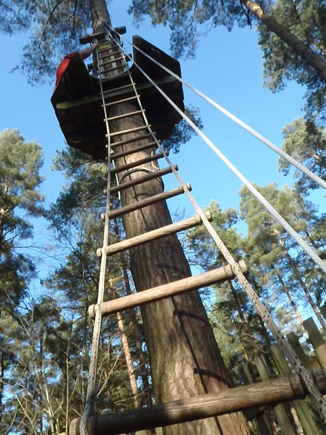 Go Ape ladder 640