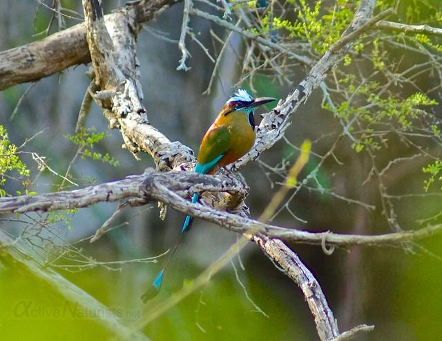 toh bird 0000 cenote Kaipech, Yucatan, Mexico