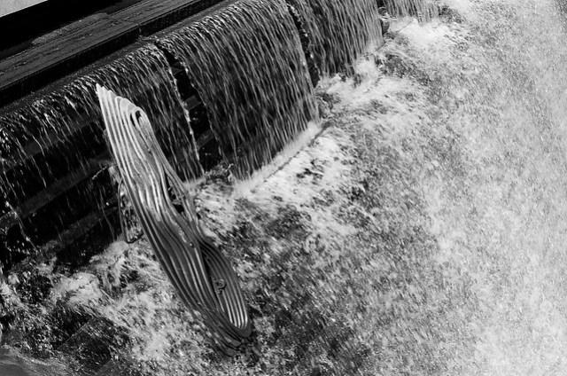 Sculpture in Water