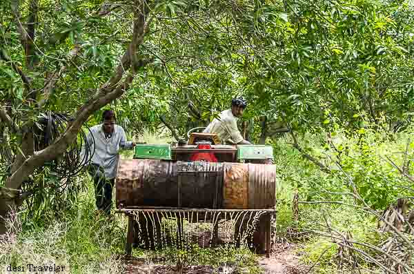 Natural panchagavyam being sprayed in farm