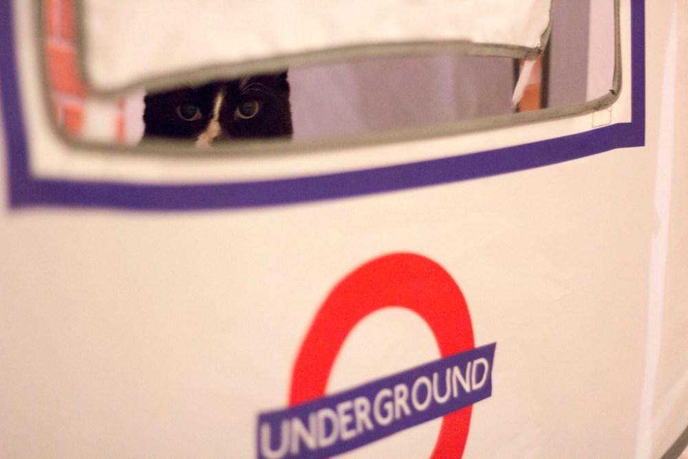 Cat on the Underground