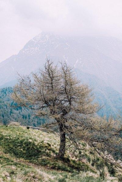 Albero sul Monte Legnoncino