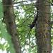 Evil squirrel I
